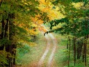 Autumnal_Forest_Trail_-_East_Texas